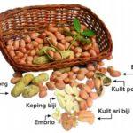 Foto : Hasil penelitian Balitbangtan menemukan khasiat kulit ari kacang tanah mampu menurunkan resiko penyakit generatif (penyakit jantung dan diabetes).