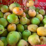 Foto. Buah - buahan Khas Lokal Yang Sedang Meningkat Jumlah Omzet Produksi dan Penjualannya.