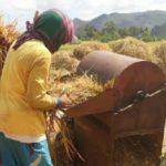 Foto : Panen Raya Yang Dilakukan Oleh Para Petani Pulau Jawa