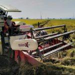 Foto. Panca Kelola Ramah Lingkungan (RAMLI) Menggunakan Alat Combine Harvester