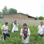 Foto : Penyuluh Pertanian Tetap Mendampingi Para Petani Agar Terus Berproduksi