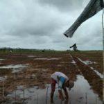 Foto : Lahan Rawa Yang Berpotensi Menjadi Sumber Penyediaan Pangan