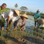 Foto : Lahan Pertanian di Kabupaten Keerom Yang Memiliki Peluang untuk Ekspor Pangan ke Negara Tetangga