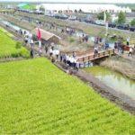 Foto : Kementan terus melakukan optimalisasi lahan rawan sehingga dapat meningkatkan produksi padi lahan rawa.