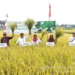 Foto: Kegiatan Panen Bersama Varietas Unggul Baru Padi Fungsional di Kebun Percobaan Muara, Bogor.
