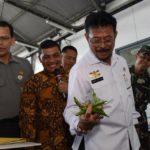 Foto : Menteri Pertanian, Syahrul Yasin Limpo, saat melihat produksi edamame untuk di ekspor dari Jember ke Jepang.