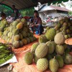Foto : Festival Durian 2020 untuk Mengangkat Pamor Durian Lokal di Danau Tamiyang, Desa Mandikapau Barat, Kecamatan Karangintan, Kabupaten Banjar.