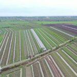 Foto: Lahan Sawah Pertanian Bawang Merah