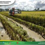 Foto : Panen Padi yang Dilakukan Menggunakan Combine Harvester bantuan dari Kementan Melalui Ditjen Sarana dan Prasarana Pertanian
