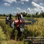 Foto : Petani Menggunakan Alsintan Bantuan dari Kementan Untuk Memanen Padi