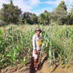 Foto : Sostenes Konyep, Motivator dan Inovator Pertanian di Fakfak, Papua Barat.