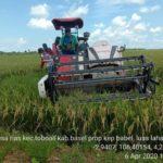 Foto : Panen Raya Padi di Provinsi Bangka Belitung Menggunakan Combine Harvester