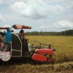 Foto : Panen oleh petani di Kabupaten Mandailing Natal, Sumatera Utara