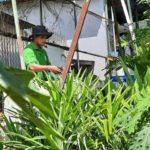 Foto : Gestianus Sino, Mantan Pegawai Honorer Dinas Pertanian NTT yang Sukses Menjadi Petani Milenial.