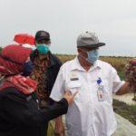 Foto : Direktur Jenderal Hortikultura Kementerian Pertanian, Prihasto Setyanto Sedang Meninjau Tanaman Bawang di Sawah Masyarakat