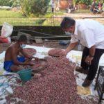 Foto : Direktur Jenderal Hortikultura Kementerian Pertanian, Prihasto Setyanto Sedang Meninjau Panen Bawang Merah di Demak, Jawa Tengah