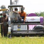 Foto : Mentan SYL, bersama bupati Pandeglang panen padi Inbrida di Kabupaten Pandeglang.