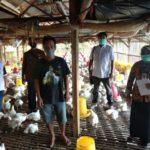 Foto : Fasilitasi Untuk Menampung dan Membeli Ayam Broiler Kepada Para Peternak Mandiri