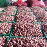 Foto : Bawang merah asal Pati untuk Dijadikan Pasokan Selama Bulan Ramadhan
