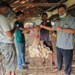 Foto : Perusahaan Mitra Tani Telah Membeli Ayam Ras Peternak Mandiri