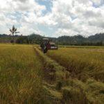 Foto : Panen Raya Padi di Kabupaten Banggai Untuk Mendukung Menjaga Kebutuhan Masyarakat